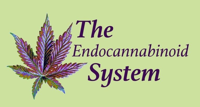 What Is The Endo-Cannabinoid System?