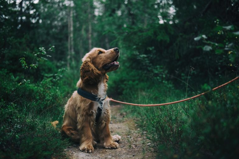 Read more about the article CBD For Dogs: How It Helps + What You Need To Know